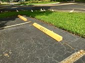 empty parking space with yellow guest parking sign in parking lot  and tropical birds in florida poster