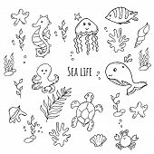 Monochrome Set Of Various Sea Creatures. Black And White Sea Life poster