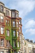 picture of english ivy  - Facades covered with ivy in the streets of Edinburgh - JPG