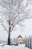 pic of uglich  - White trees and yellow church in winter in Uglich - JPG