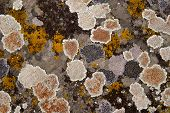 Lichen Stone Background
