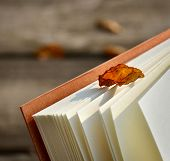 autumnal leaves on the page of open book