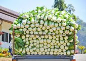 stock photo of truck farm  - Cabbage on the truck in Chiang Mai Thailand - JPG