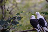 stock photo of soulmate  - Pair of love birds on the branch of a tree. Photo taken on July 26 2014 in Dalian of China.