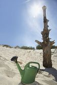 stock photo of water shortage  - Watering can by dead tree on sandy beach - JPG