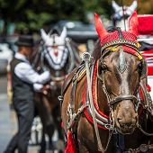 pic of carriage horse  - Horse Carriage waiting for tourists at the Old Square in Prague - JPG
