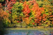 foto of kensington  - Bright autumn trees in Kensington metro park - JPG