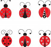 pic of ladybug  - isolated black - JPG