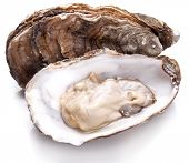 stock photo of oyster shell  - Raw oyster on a whte background - JPG