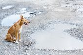 picture of stray dog  - Close up dirty stray dog sitting on bumpy road with water - JPG