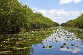 stock photo of swamps  - everglades swamp in Florida in hot summer - JPG