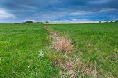 picture of grassland  - Green springtime meadow landscape with cloudy storm sky - JPG