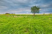 stock photo of grassland  - Green springtime meadow landscape with cloudy storm sky - JPG