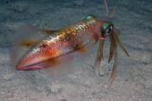 pic of mm  - Her ses en serie billeder fra dykning - JPG