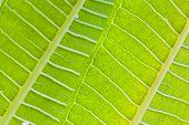 foto of tropical plants  - macro shot of a tropical plant vibrant green leaves - JPG