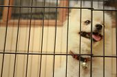 foto of caged  - Pomeranian puppy in a cage at the park - JPG
