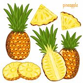 Постер, плакат: Pineapple Isolated Vector