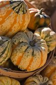 stock photo of hayride  - Beautiful pumpkins at a local county fair - JPG
