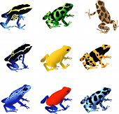 picture of orange frog  - A collection of 9 different species of poison dart frogs - JPG