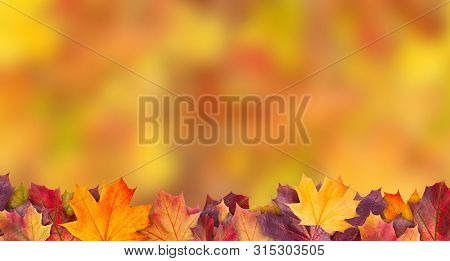 poster of Amazing Colorful Background Of Autumn Maple Tree Leaves Background With White Empty Space. Multicolo