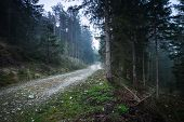 Cycling Through Forest On A Rainy Day. Rocky Road In Forest Nature. Green Forest Road. Nature. Road. poster