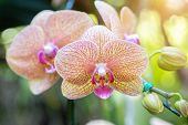 Orchid Nature Background. Nature Background Of Orchid. Flower Nature Background. Close Up Background poster