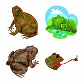 Vector Illustration Of Frog And Anuran Icon. Set Of Frog And Animal Stock Symbol For Web. poster