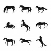 Vector Design Of Fauna And Mare Logo. Collection Of Fauna And Stallion Vector Icon For Stock. poster