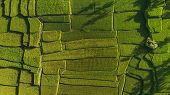 Abstract Geometric Shapes Of Agricultural Parcels In Green Color..bali Rice Fields. Aerial View Shoo poster