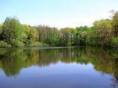 pic of mckenzie  - Peaceful summer morning on a pond in McKenzie - JPG