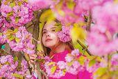 Pollen Allergy Concept. Kid Enjoy Cherry Blossom Sakura. Kid On Pink Flowers Sakura Tree Background. poster