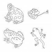 Vector Illustration Of Amphibian And Animal Symbol. Collection Of Amphibian And Nature Stock Vector  poster