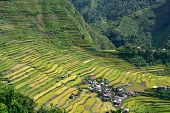 foto of ifugao  - Rice terraces in Batad valley in the Philippines - JPG