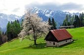 stock photo of early spring  - Scenic view on the house next to the pasture on mountains background - JPG