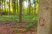 The recycle symbol carved into a tree in managed woodland. This tree was marked to be cut down as pa