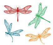 picture of dainty  - Set of four different pretty dainty dragonfly designs with delicate wings in red - JPG