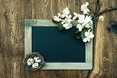 picture of apple blossom  - chalkboard with apple tree blossom and easter eggs decoration on rustic wooden background - JPG