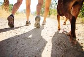 picture of furry animal  - a dog out enjoying nature with two women - JPG