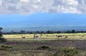 foto of kilimanjaro  - Grant - JPG
