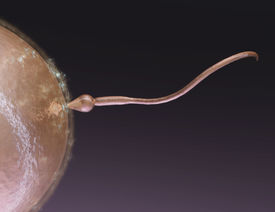 picture of coitus  - Digital 3D Illustration of a human Egg Cell - JPG