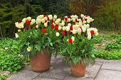 stock photo of planters  - Red - JPG