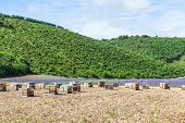 foto of beehive  - Provence South France - JPG