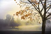stock photo of maple tree  - Autumn landscape with fog and sunshine maple tree in foreground - JPG