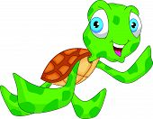 picture of terrapin turtle  - vector illustration of cute sea turtle cartoon - JPG