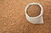 stock photo of buckwheat  - Full linen sack with buckwheat on background of scattered buckwheat - JPG