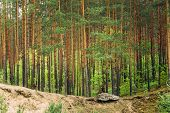 picture of coniferous forest  - Green Coniferous Forest Landscape - JPG