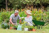 stock photo of grandfather  - Happy grandmother and grandfather gardening on a sunny day - JPG