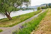 image of moselle  - bikeway at the riverside of moselle river germany - JPG