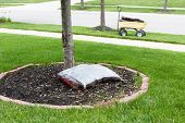 stock photo of neat  - Mulching around the trunk of a tree in a neat circular flowerbed with a pocket of commercial organic mulch from a nursery at the start of spring in a yard work concept - JPG