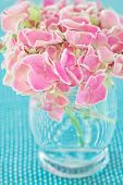 stock photo of hydrangea  - Pink hydrangea flowers in a vase on a blue background  - JPG